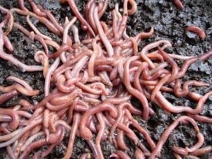 Worm Farm Waste Systems