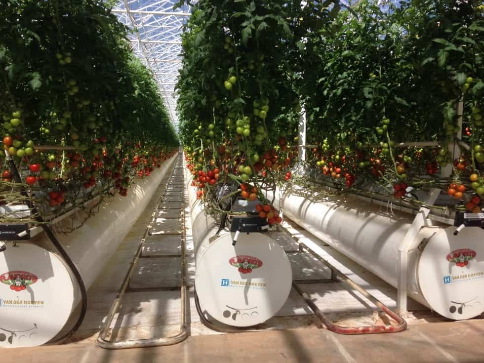 Flavorite Tomatoes Uses Worm Farm Commercial Septic Tank Systems